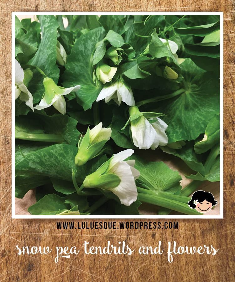luluesque_snow pea tendrils-flowers