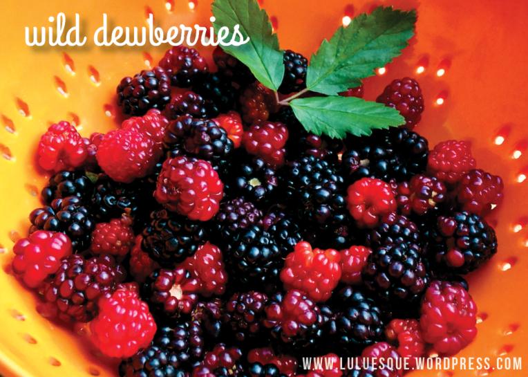 luluesque-wild dewberries